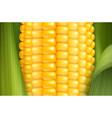 realistic corn background vector image