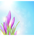 Spring background with violet crocuses vector image vector image