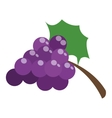 grapes with leaf icon vector image