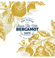 bergamot branch design template kaffir lime frame vector image vector image