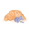 delicious baked croissant and cute chicory flowers vector image