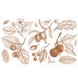 vintage drawing floral design vector image vector image