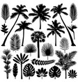 palm and tropical plant silhouette set vector image