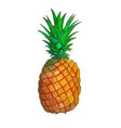 juicy pineapple fruit vector image