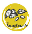 sunflower seed vintage hand drawing of seeds vector image vector image