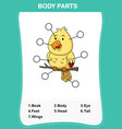 bird vocabulary part of body vector image vector image