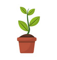 potted plant garden botanical element vector image vector image