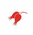 rose hip vector image vector image