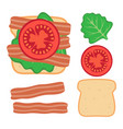 sandwich ingredients with lettuce bacon and tomato vector image