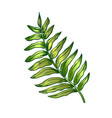 areca palm tropical exotic leaf color hand drawn vector image vector image
