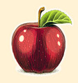 apple fruit with green leaf vector image