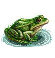 frog color graphic portrait a frog vector image vector image