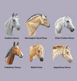 set of portraits of horses breeds vector image vector image