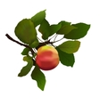 apple with leaves vector image vector image