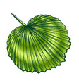 licuala grandis tropical exotic leaf color retro vector image vector image