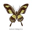 set hand drawn colored papilio torquatus vector image vector image