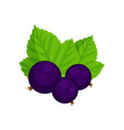 black currant isolated on vector image