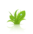 Green grass with drops isolated on white vector image vector image