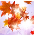 Abstract autumn with maple Leaves vector image vector image