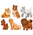 Different species of dogs vector image vector image