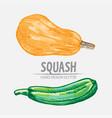 digital detailed squash hand drawn vector image vector image