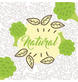 food organic nature vector image vector image