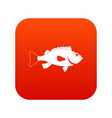 sea bass fish icon digital red vector image vector image