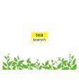 tea template 1 vector image vector image