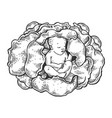 baby in cabbage engraving vector image vector image