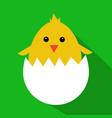 cute yellow cartoon baby chicken vector image vector image