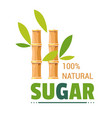 sugar natural organic product sugarcane farm vector image vector image