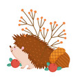 autumn hedgehog acorn berries banches isolated vector image vector image