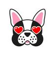 cartoon french bulldog dog with hearts in eyes vector image vector image