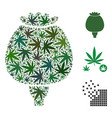 opium poppy collage of marijuana vector image