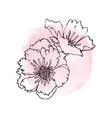 hand drawn poppies isolated vector image