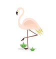 beautiful abstract single pink flamingo standing vector image vector image