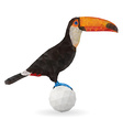 Cute Toucan Sitting on a Ball vector image