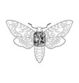 death head moth jewelry pattern vector image