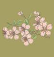 pink sakura on green background vector image vector image