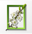 branch of white cherry flowers in green frame vector image