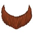 brown beard isolated