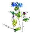 drawing flowers of cornflower vector image vector image