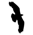eagle on white background vector image vector image