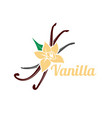 vanilla flower and pods icon silhouette vector image vector image