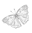 flying butterfy card vector image