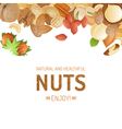 background with different nuts vector image vector image