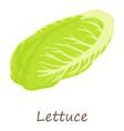lettuce icon isometric style vector image