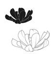 echeveria runyonii rosette succulent stone rose vector image