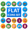 internal organs of a human flat icons in set vector image
