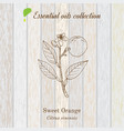 sweet orange essential oil label aromatic plant vector image